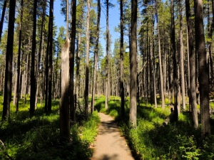 woodlands-trail-cypress-hills