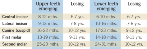tooth chart picture
